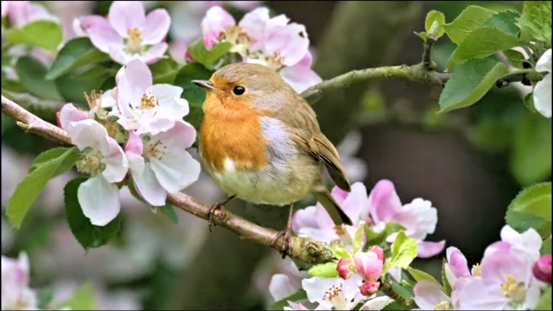 О весне